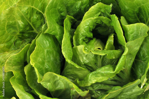 Cœur de salade