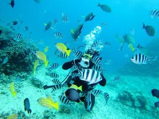 熱帯魚に囲まれるダイバー