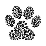 dog footprint