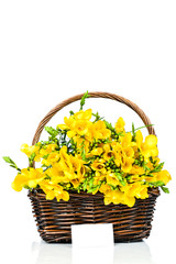 Yellow freesia flowers in the wicker with a blank card