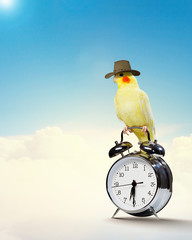 Parrot sitting on alarm clock