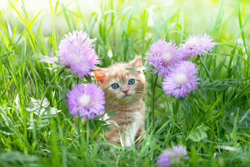 Cute little kitten sitting in flowers on the grass
