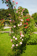 Rosenbögen im Park