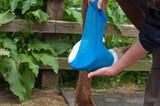 Bandaging a hoof