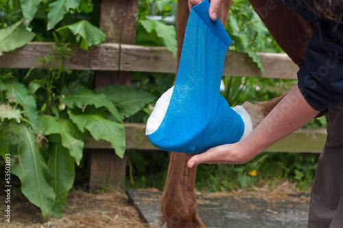 Bandaging a hoof - 53503893