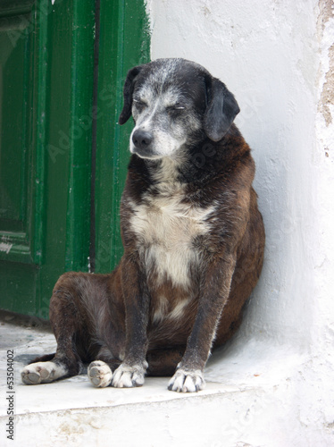 Lonely old dog