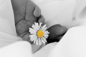 Babyfüßchen Gänseblümchen schwarzweiß 4