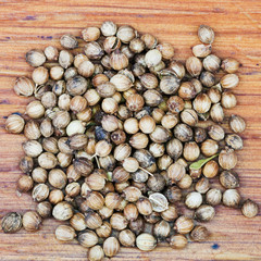 dried coriander fruit seeds