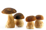 Four porcini mushroom