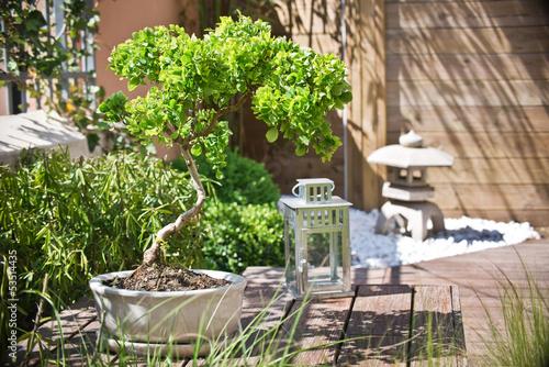 Fotobehang Tuin Bonsaï dans un coin de jardin zen