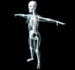 Corpo umano donna ai raggi x scheletro