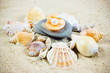The exotic sea shell . treasure from the sea.