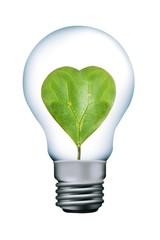 Heart leaves in lamp