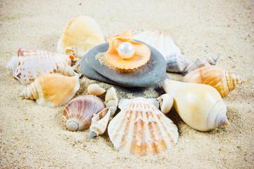 The exotic sea shell . treasure from the sea.