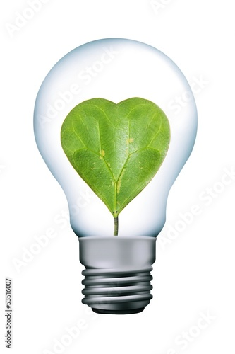 Heart leaves in lamp