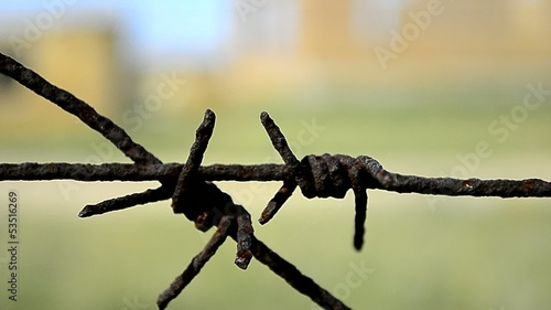 old rusty barbed wire on a background of green grass
