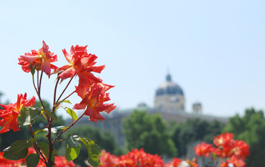 Roses in the Volksgarten, Vienna