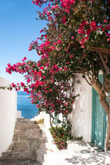 Traditional greek alley on Sifnos island, Greece © zoipap