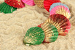 Colorful seashells on sand background