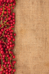 red currant on sackcloth