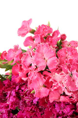 Bouquet of carnations, isolated on white