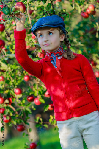 Orchard - young girl picking ripe apples