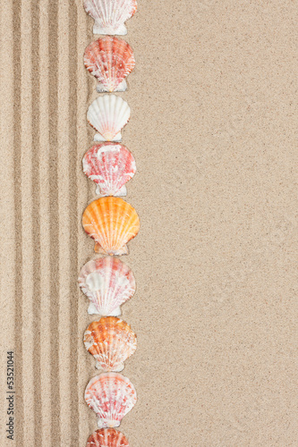 Stripe of seashells lying on the sand