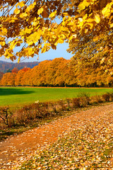 Lichtentaler Allee im Herbst, Baden-Baden