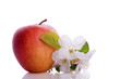 red apple fruit with white blossom