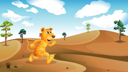 A tiger running in the desert