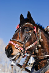 Horse under the collar