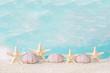 Am Meer - Sandstrand mit Muscheln als Hintergrund maritim