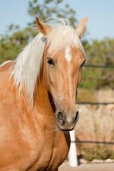 cruzado helles pferd im freien auf der weide im sommer