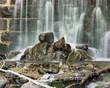 Fototapeten,wasserfall,little,wasser,steinwand