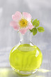 Églantier - Parfum et Huile essentielle