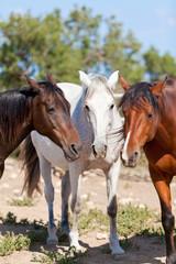 pre reine rassige pferde in gruppe im freien im sommer