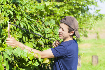 Boy with a slingshot at the vine in summer
