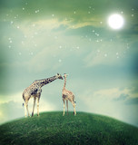 Giraffes in friendship or love concept image - 53541459