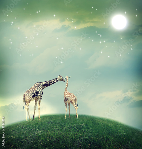 Fotobehang Giraffe Giraffes in friendship or love concept image