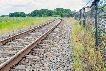 Red flowering poppies next to the curved railroad
