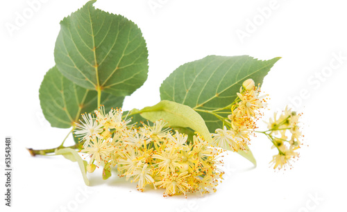 linden flowers