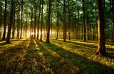 Fototapeta Krajobraz - Rays of light © ck