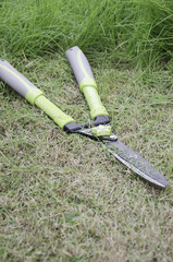 Scissors to cut the grass.