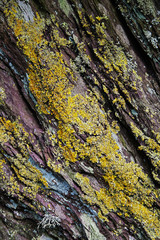 Rock Crevices with Lichen - Background / Nature Abstract.