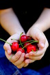 berry cherry in children's hands - organic concept