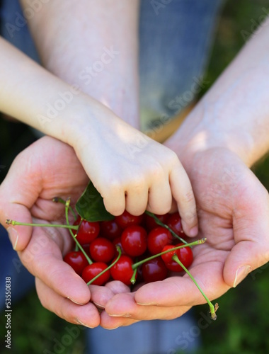 berry cherry in male hands - organic concept