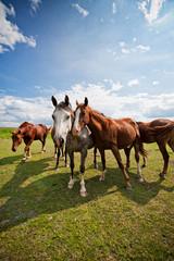 gather of four horses on a farm