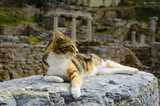 The cat is lying on the ruins