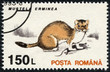 stamp printed in the Romania, shows the Stoat