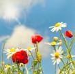canvas print picture - Sommerwiese mit Sonnenschein
